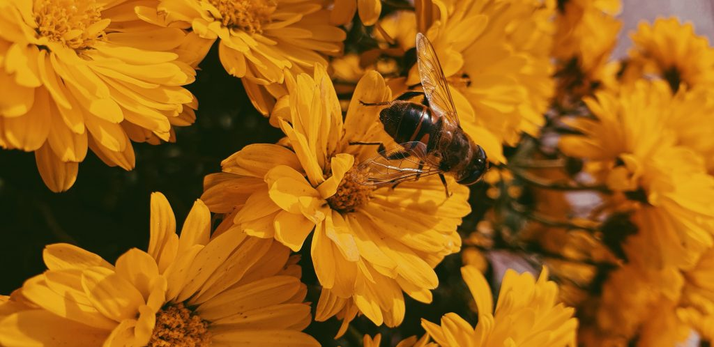 gezondheidsvoordelen bijenpollen