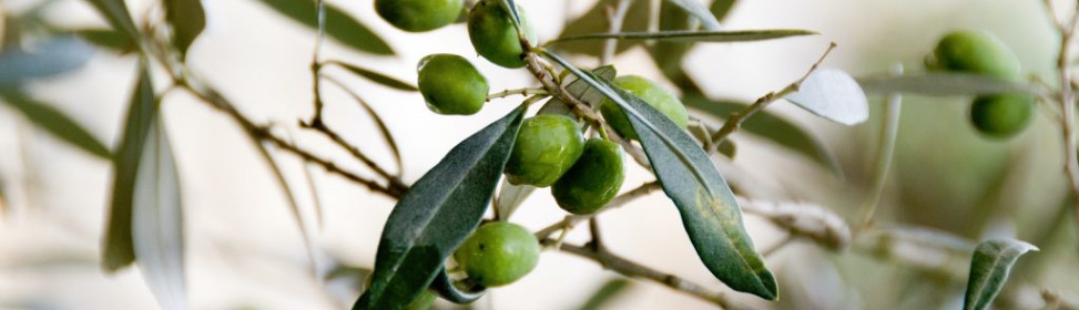 olijfolie huid